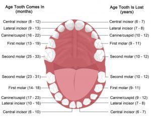 Kids Teeth Development
